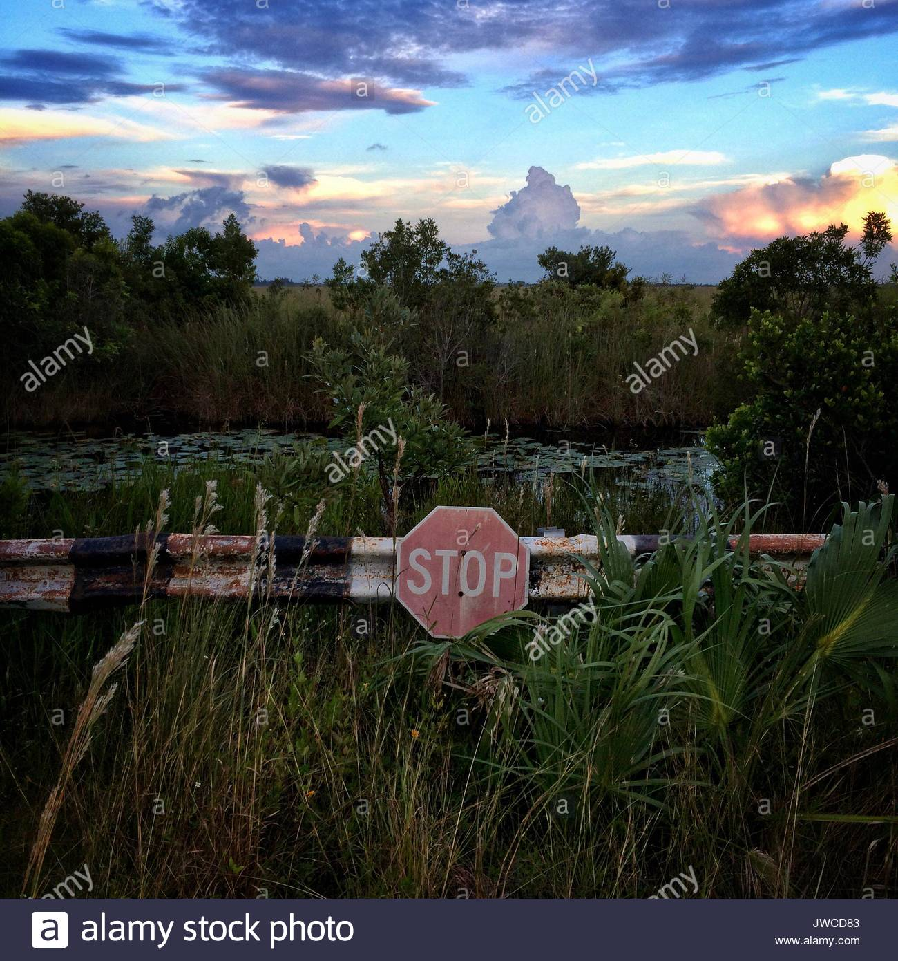 A stop sign on a back road in the Chekika area of Florida's Everglades National Park. - Stock Image