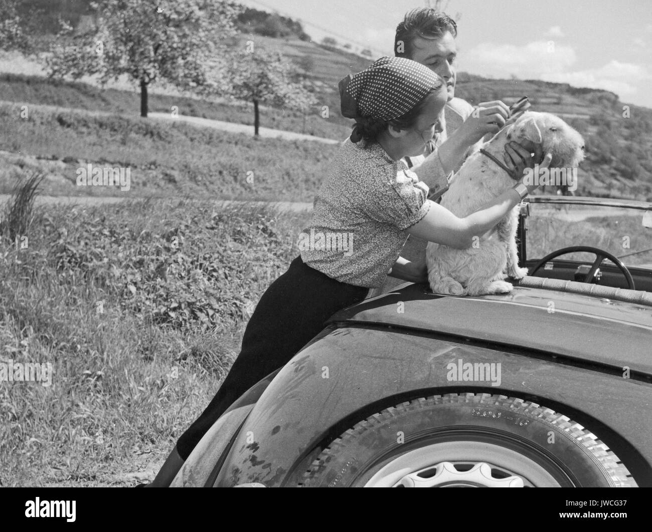 Man and woman grooming dog sitting on parked car. - Stock Image