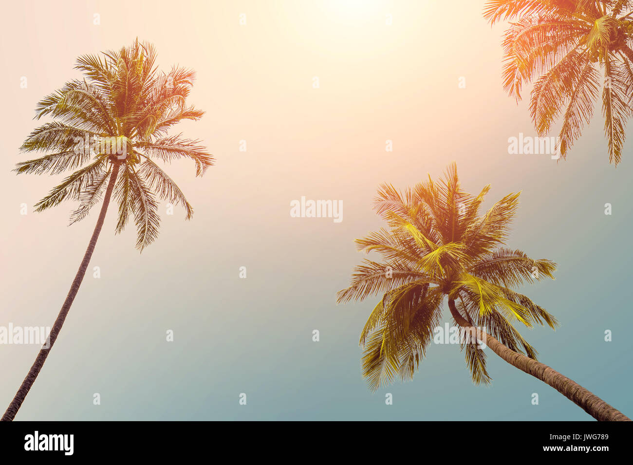 Coconut tree at tropical coast, Vintage Tones,Warm tones - Stock Image