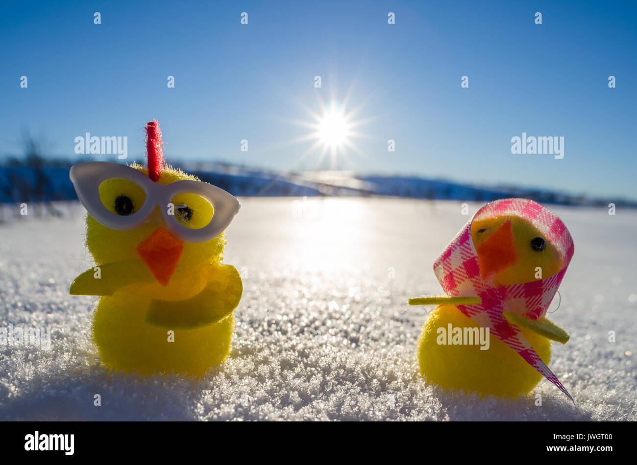 Two yellow easter chicken chickens - Stock Image
