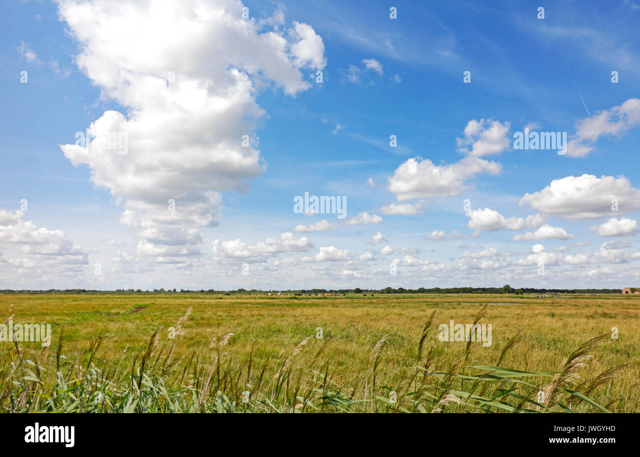 An example of a big sky over grazing marshes in the Broads National Park at Potter Heigham, Norfolk, England, United Stock Photo