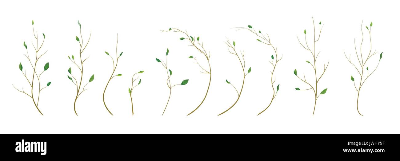 Tree branch, twig designer art different foliage natural branches, leaves, anniversary elements in watercolor style set collection. Vector decorative, - Stock Vector