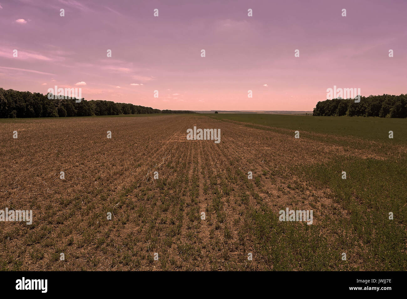 Field rests in summer. Fallow land in the evening Stock Photo