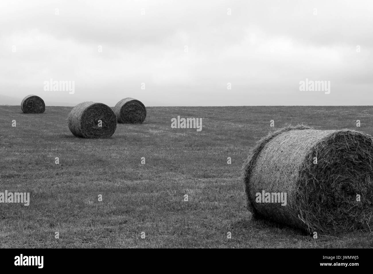 hay bales orkney scotland - Stock Image
