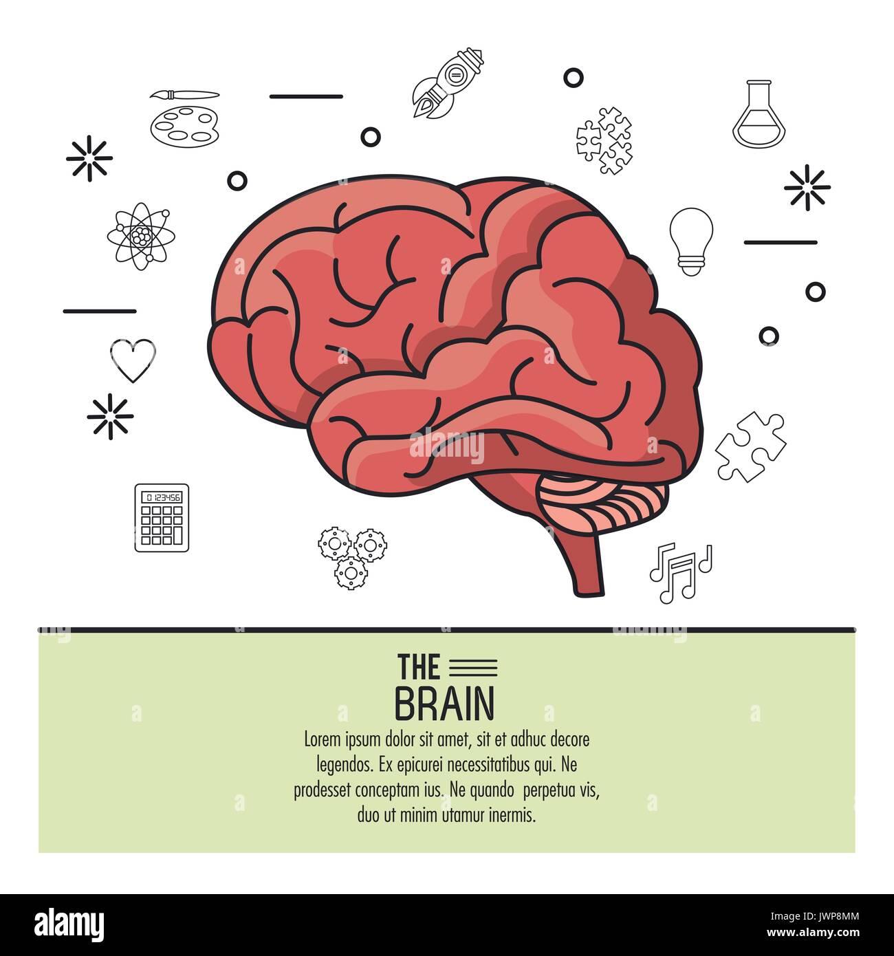Human Brain And Medical Logo Stock Photos & Human Brain And Medical ...