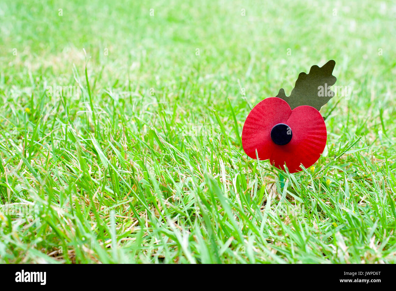 Remembrance day poppy laying in grass with a shallow depth of field and copyspace - Stock Image