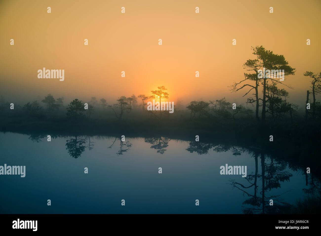 a beautiful, dreamy morning scenery of sun rising in a misty swamp
