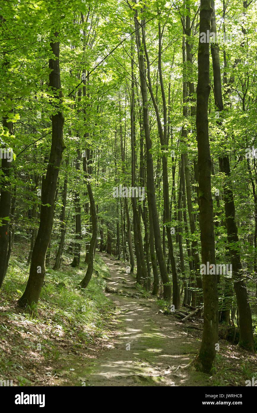 trail to Bruchhausen Rocks, Sauerland, Northrhine-Westfalia, Germany - Stock Image