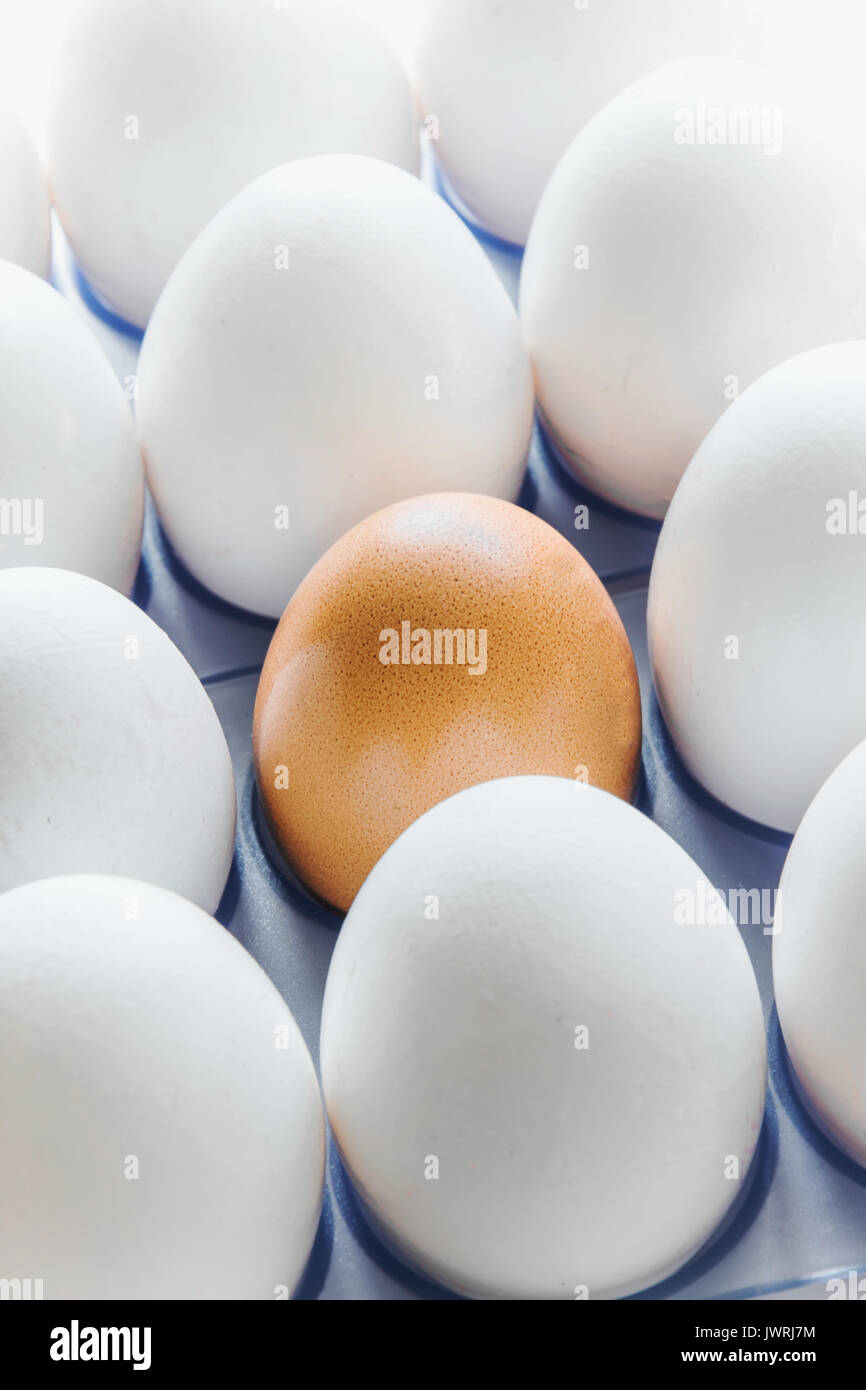 One brown egg in the middle of the white eggs - Stock Image