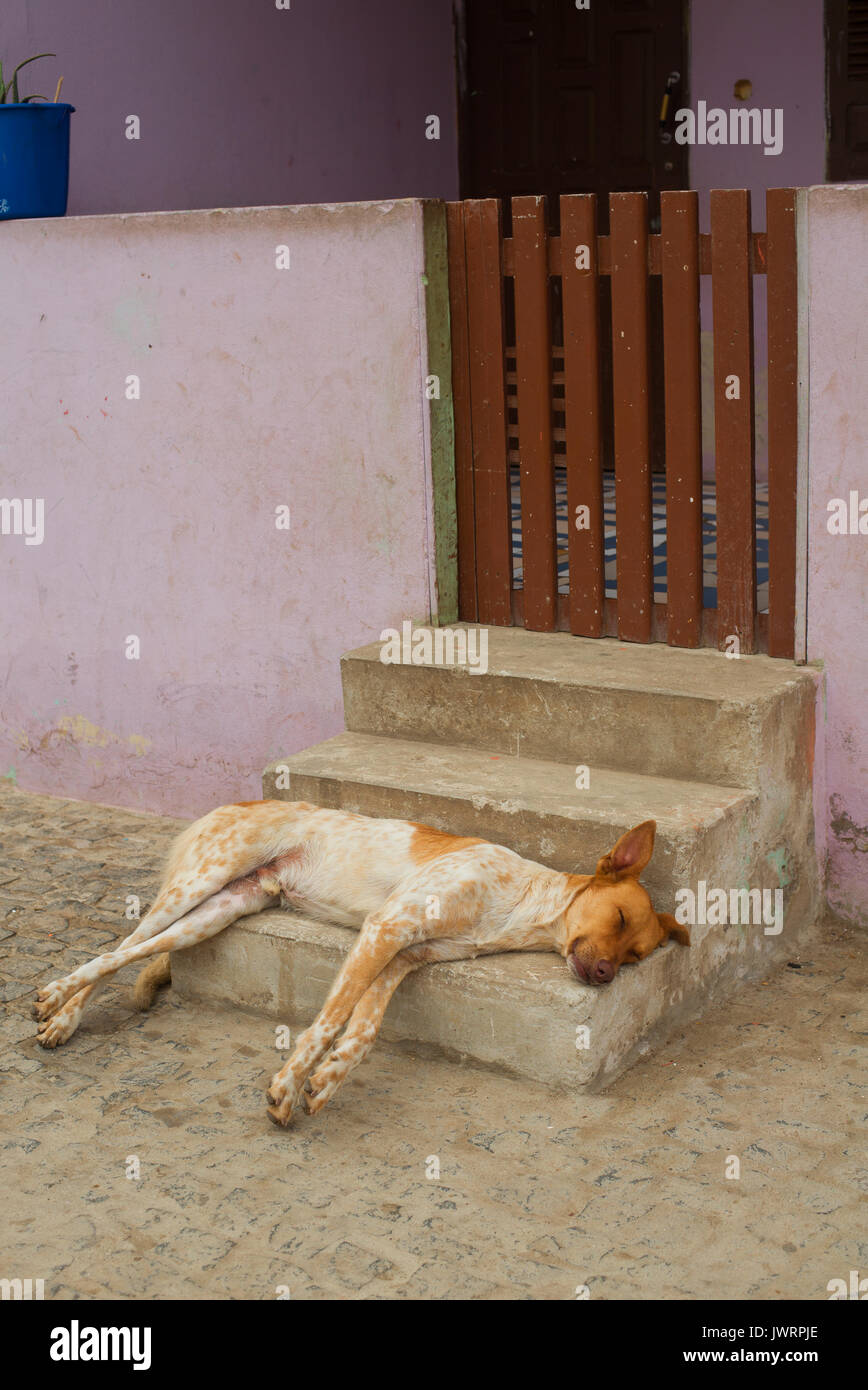 Dog asleep on step, Cape Verde - Stock Image
