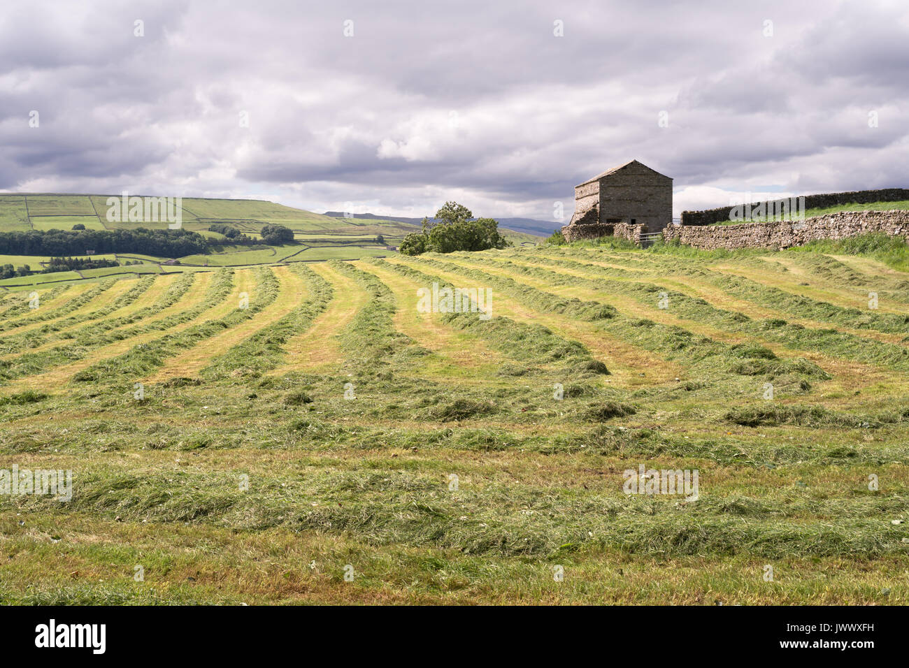 Swathes of grass fodder in field near Askrigg, Wensleydale, Yorkshire, England, UK - Stock Image
