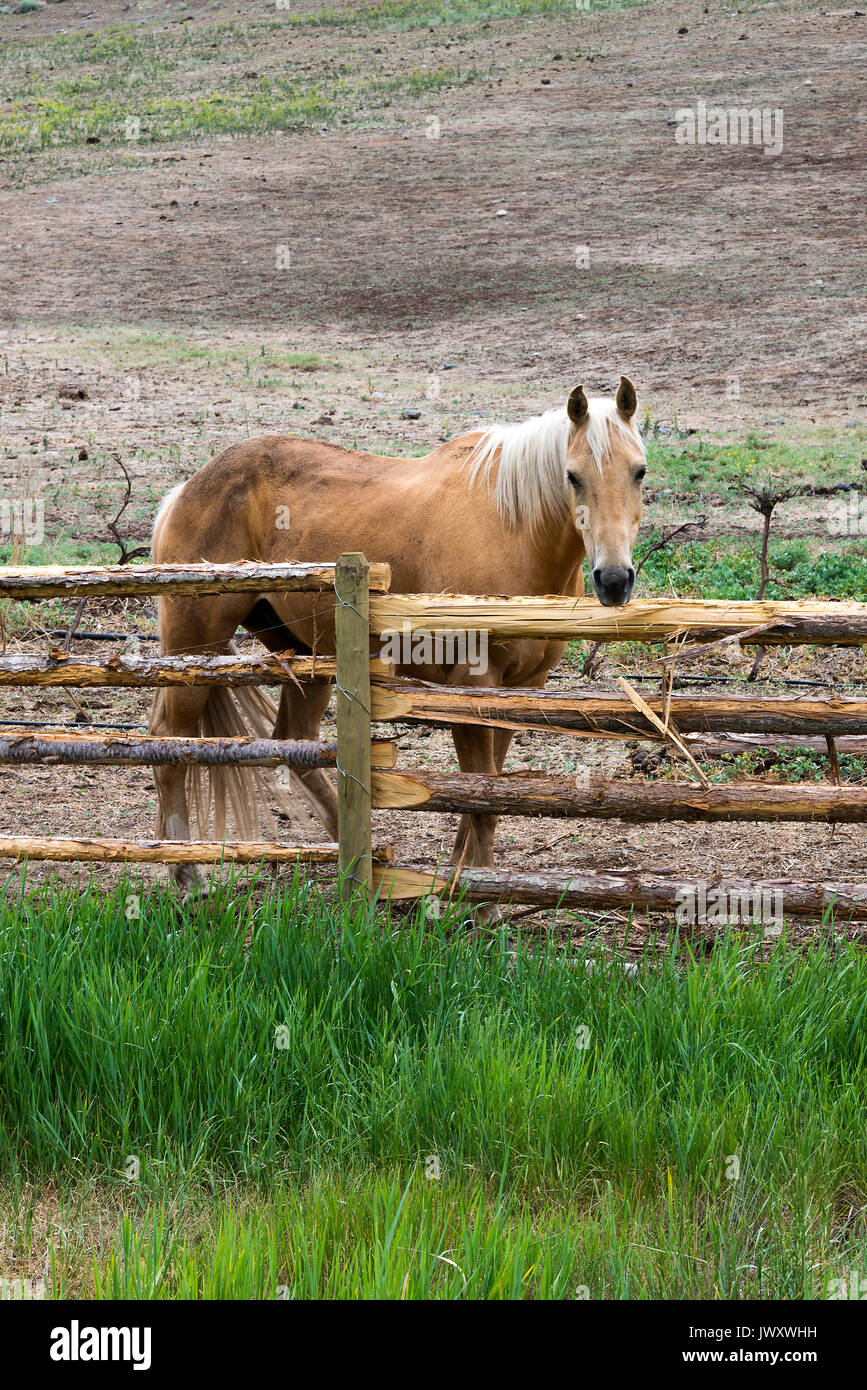 A Lovely Horse in a Field near Lillooet in British Columbia Canada Stock Photo