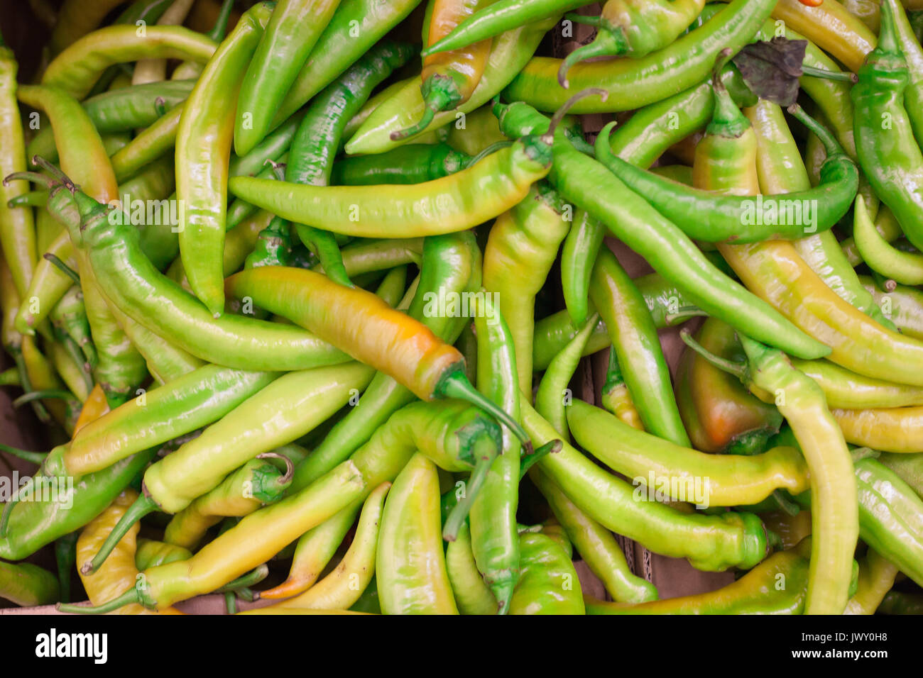 New Mexico Chili Peppers Stock Photos & New Mexico Chili Peppers ...