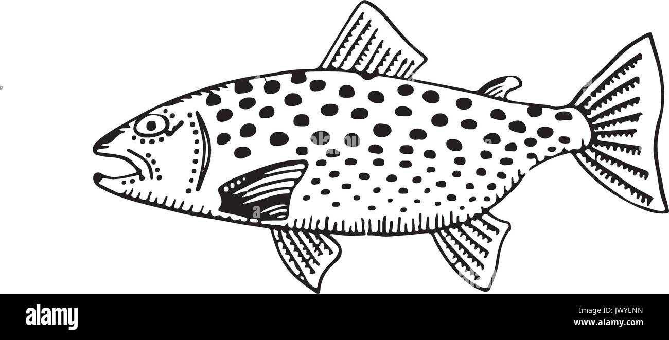 Simple Trout Drawing