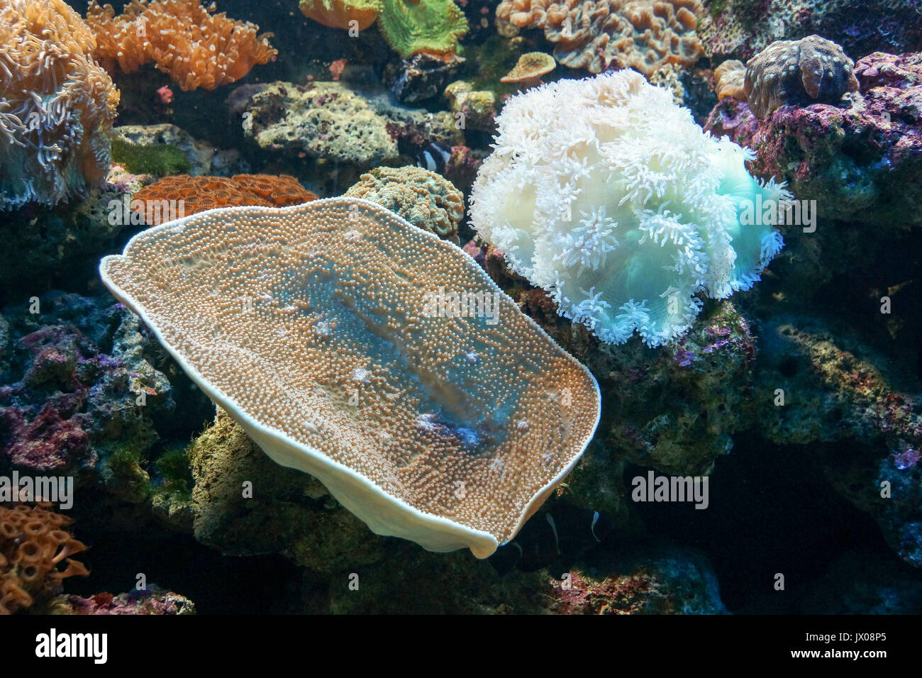Types of coral stock photos types of coral stock images alamy coral reef with many different types of coral stock image publicscrutiny Images