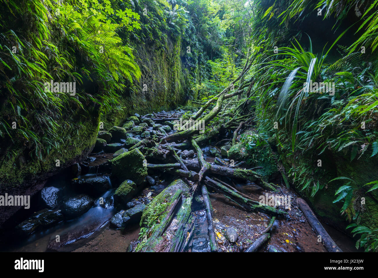 Gorge overgrown with ferns and moss, Nichols Stream, Leith Valley, Dunedin, Otago, New Zealand - Stock Image