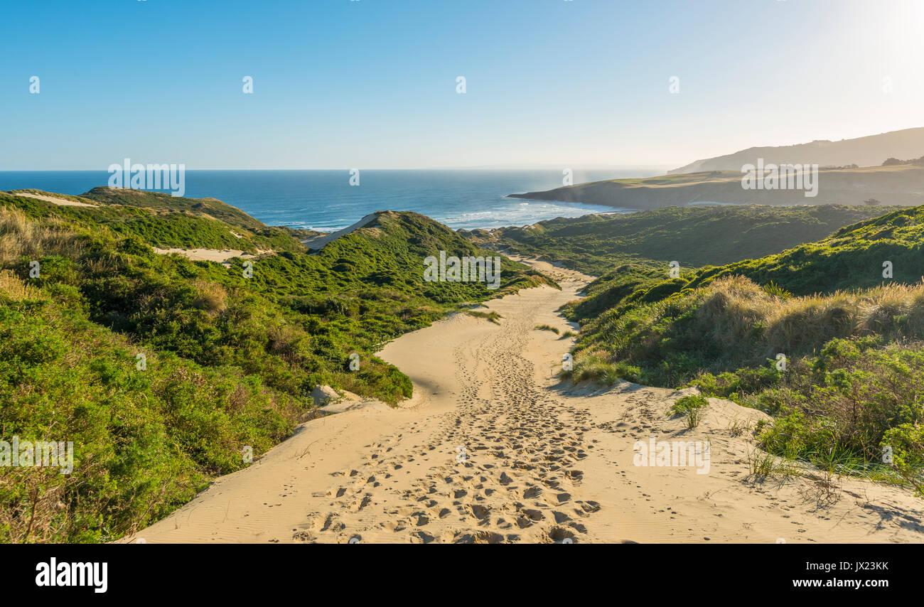 Coastal landscape with sand dunes, Sandfly Bay, Otago, South Island, New Zealand - Stock Image