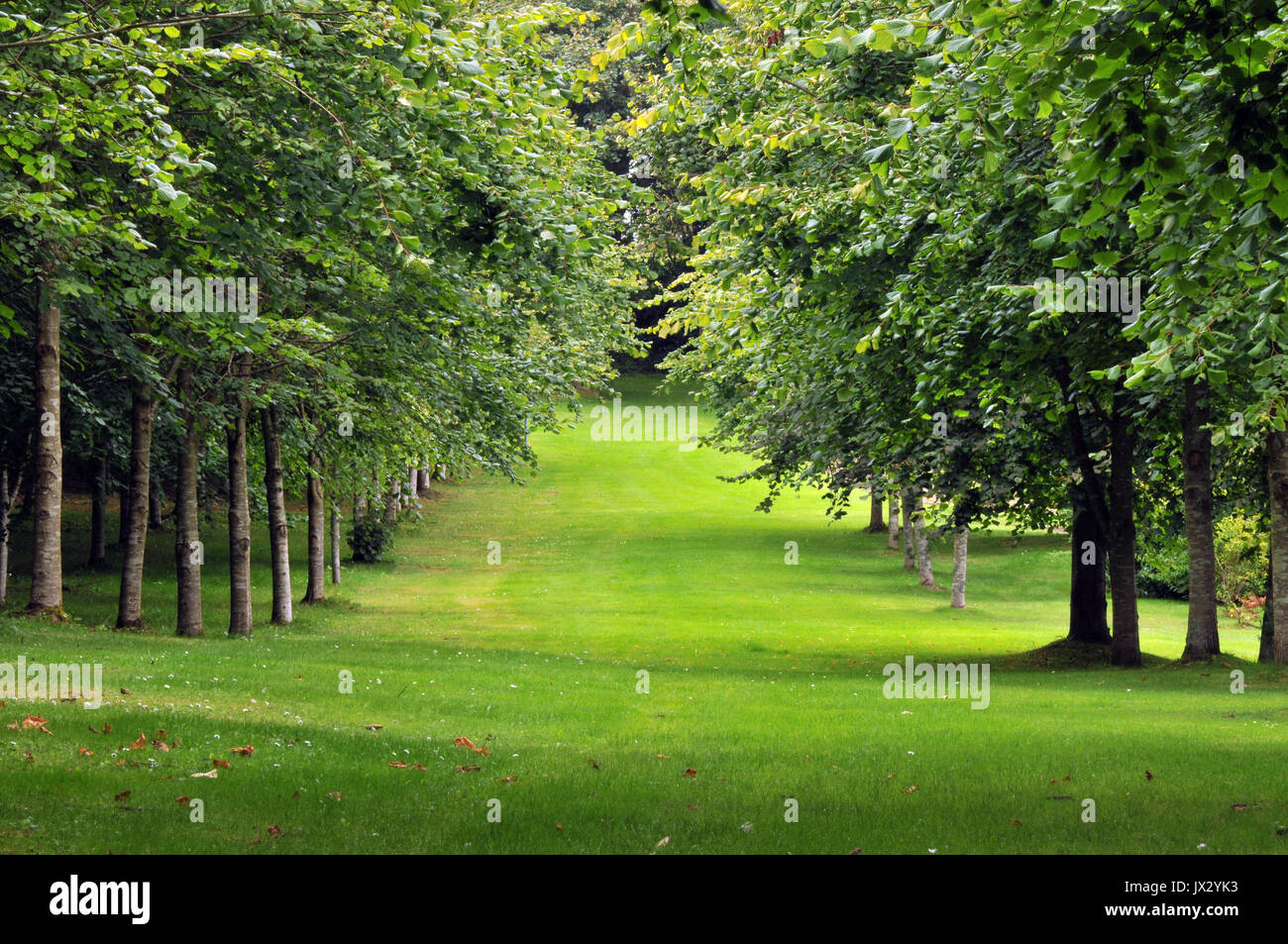 the landscaped gardens and avenues of trees at prideaux place manor house in padstow on the north Cornish coastline. - Stock Image
