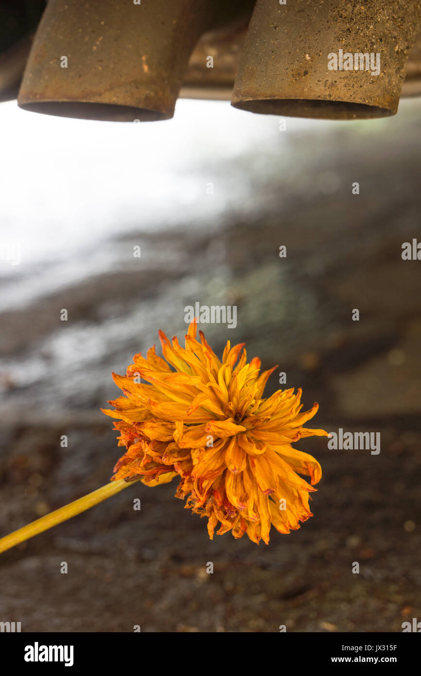 Not subtle, dead and wilting flowers below diesel exhaust pipes highlighting concerns over diesel emissions and the damage to wildlife and flora. - Stock Image