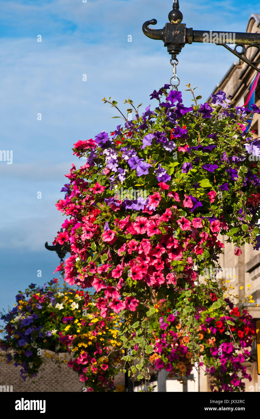 Colourful Hanging Baskets On Street Lamp posts - Stock Image