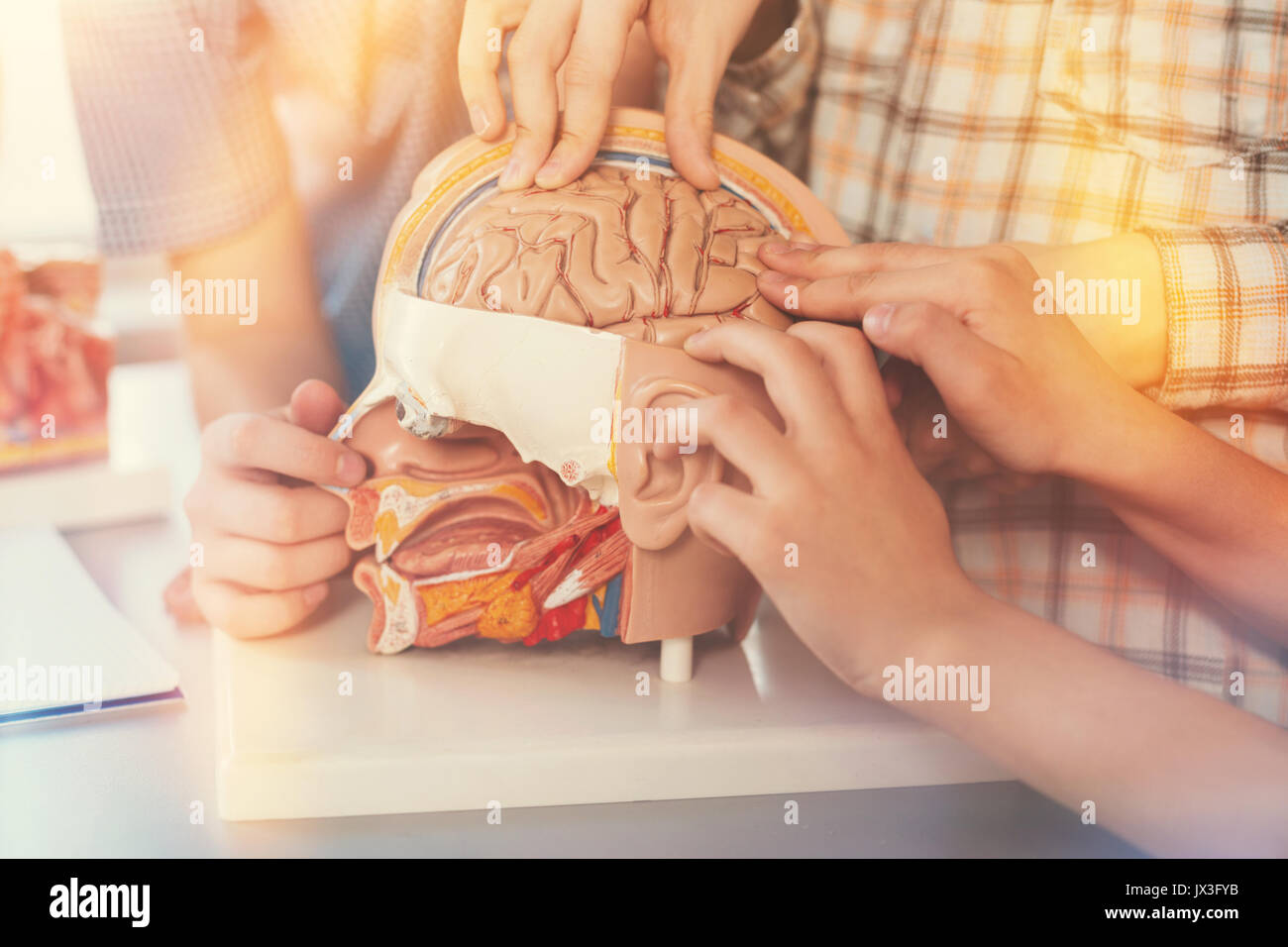 Close up of little hands that touching model of human brains - Stock Image
