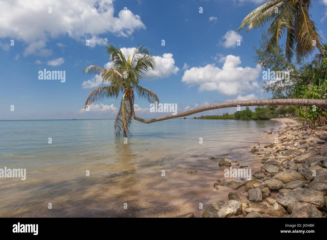 A lone coconut palm tree against a blue sky at Hin Kong Beach, Koh Phangan, Thailand - Stock Image