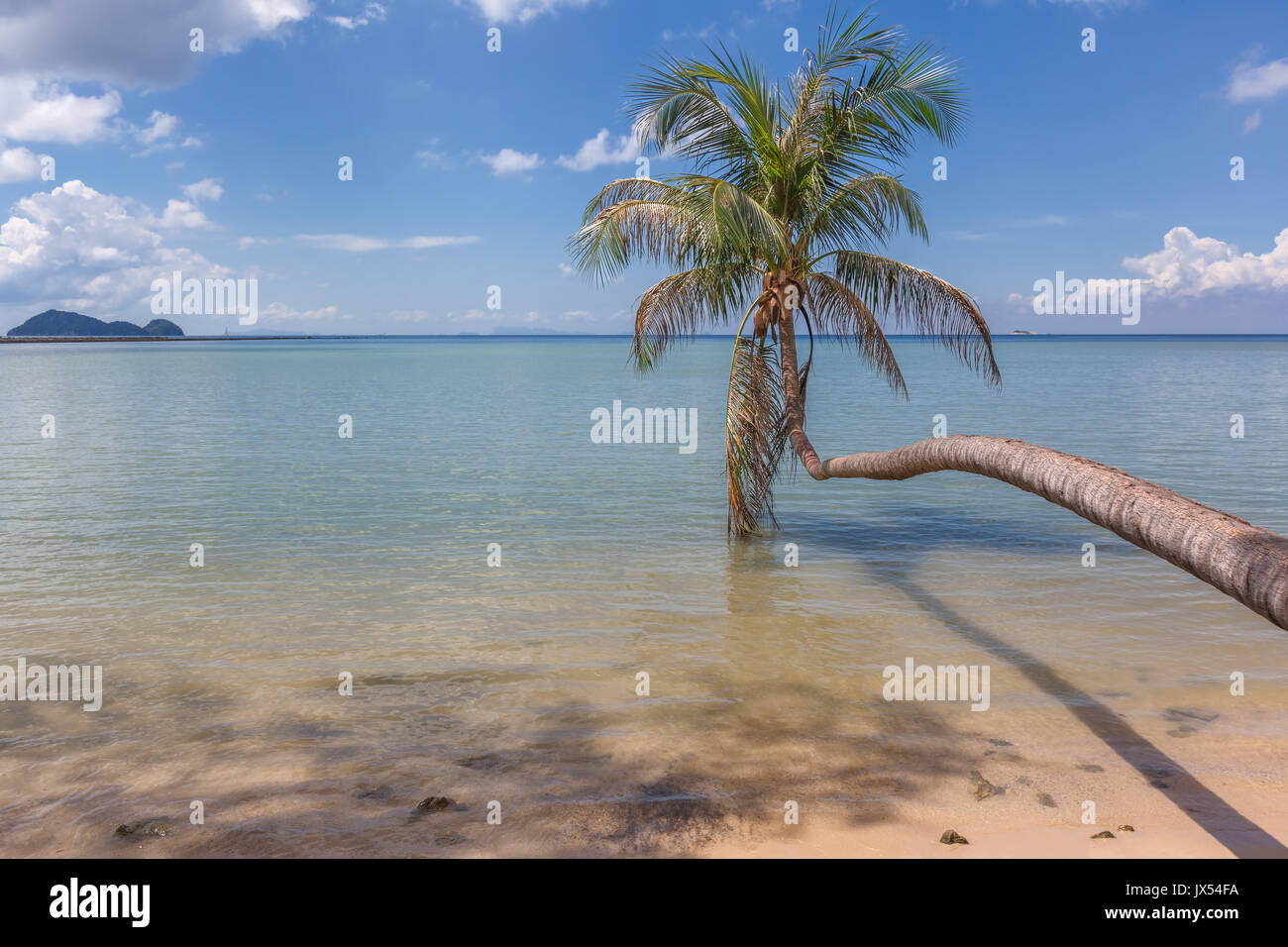 A lone coconut palm tree against a blue sky at Hin Kong Beach, Koh Phangan, Thailand - Stock Image