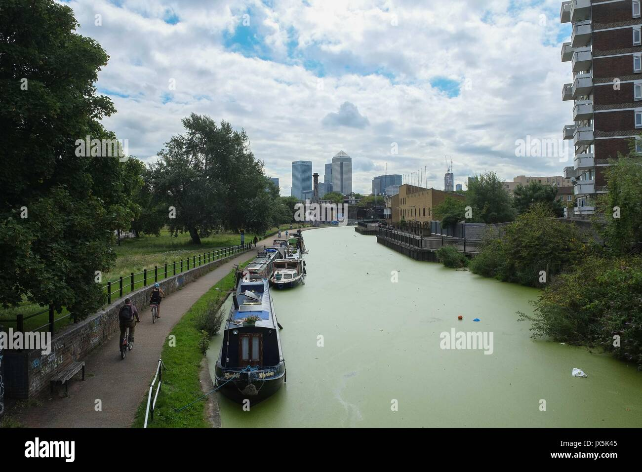 London, UK. 15th Aug, 2017. Limehouse Cut - London's oldest canal is covered in growing green algae after recent warms conditions in London. If the algae is toxic it uses up oxygen in the water at night which can suffocate fish and other creatures.Advise from the UK Enviroment Agency is to assume it is toxic and keep pets and children away from the water and avoid skin contact with the water or algae. :Credit: Claire Doherty Alamy/Live News - Stock Image