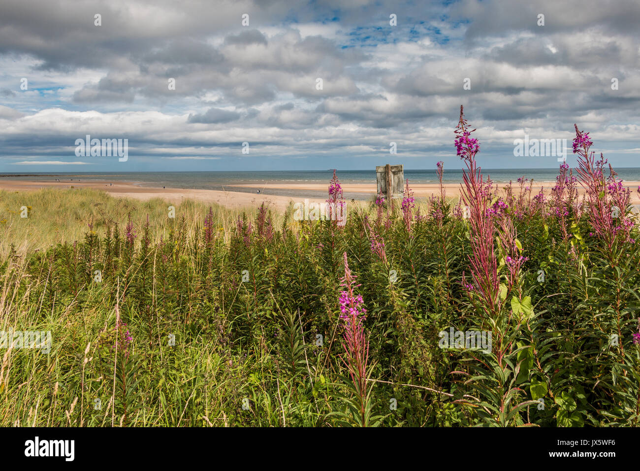 Alnmouth Beach, Northumberland Coast, UK with copy space - Stock Image