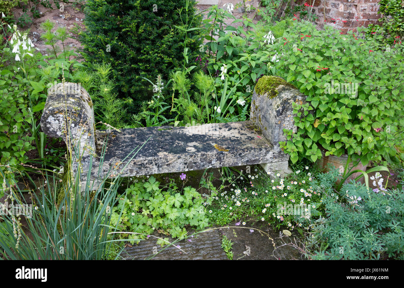 Stone bench among a semi wild planting of perennials at medieval Cothay Manor near Wellington in Somerset UK - Stock Image