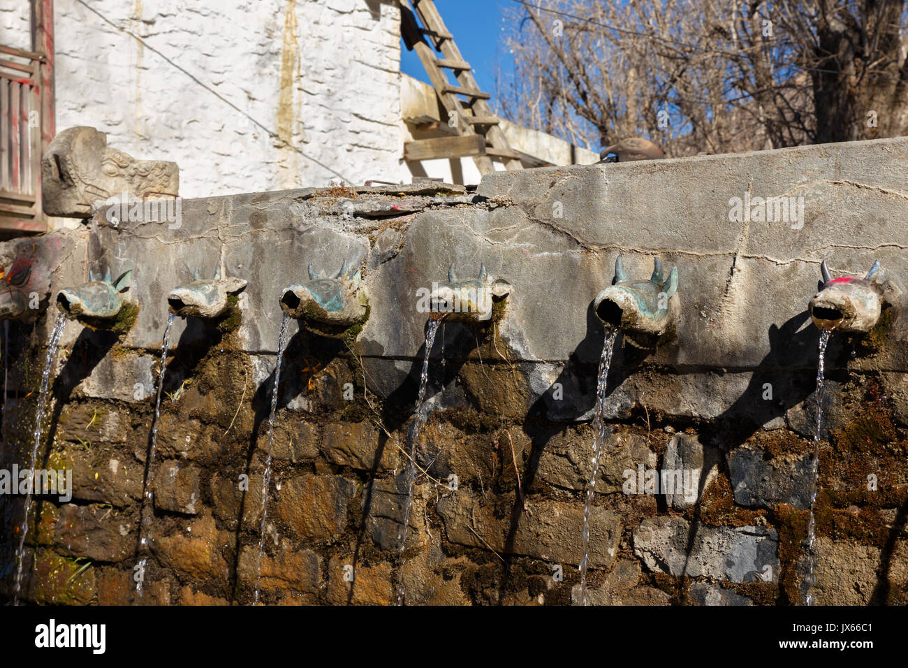 Bull head pipe of the holy spring at sacred Muktinath temple - Stock Image