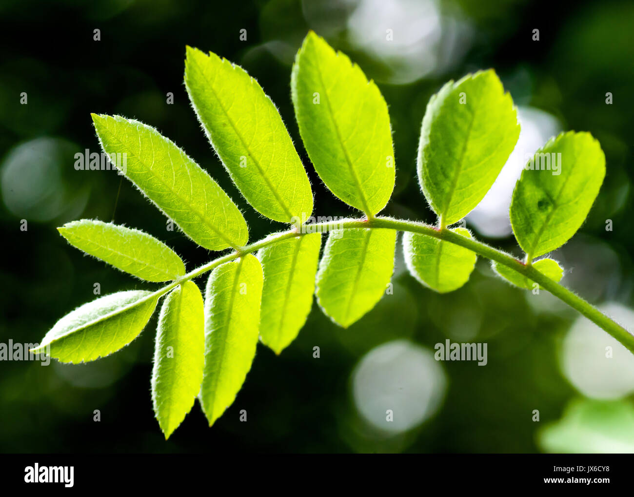 Fresh green leaf background. Creative layout made of green leaves. Flat lay. Nature background. Background pattern Stock Photo