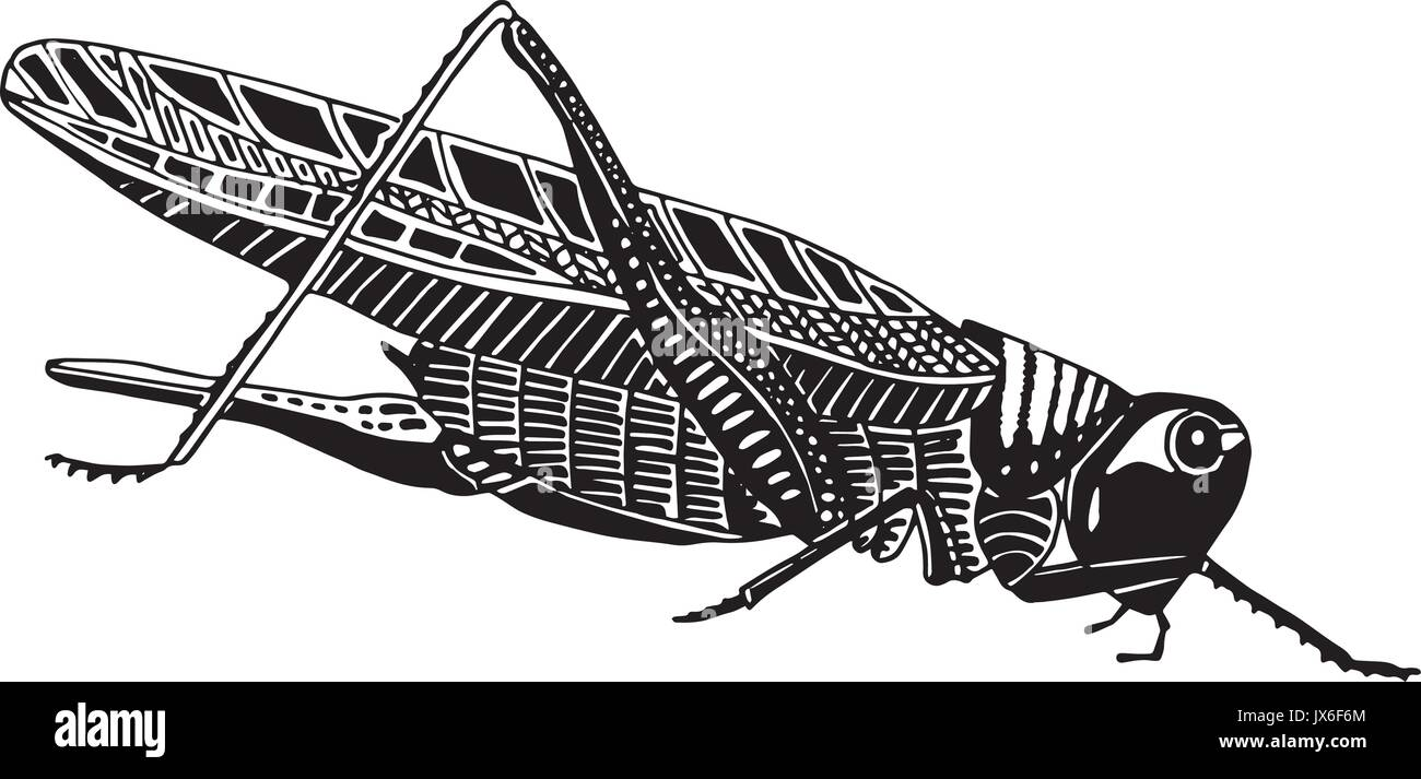 Grasshopper insect - Stock Vector