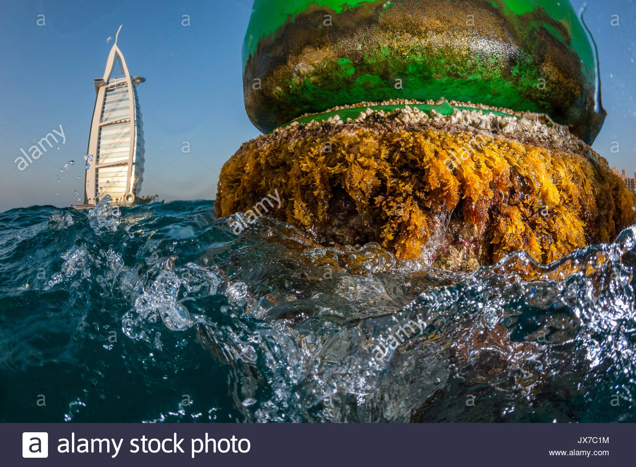 Seaweed on a mooring buoy in the Arabian Gulf. - Stock Image