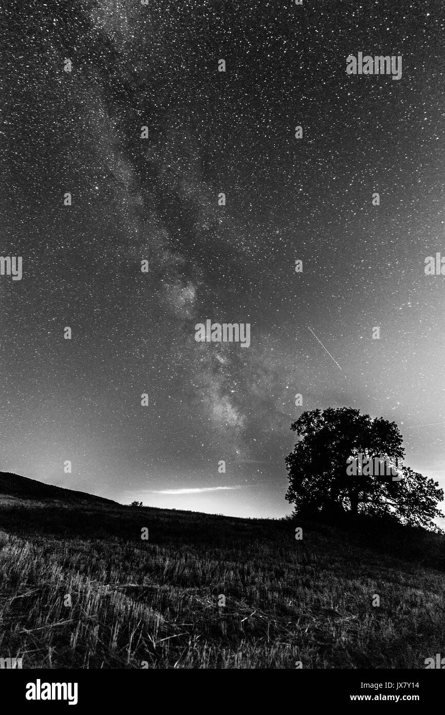 Beautiful view of milky way with a tree and grass in the foreground - Stock Image
