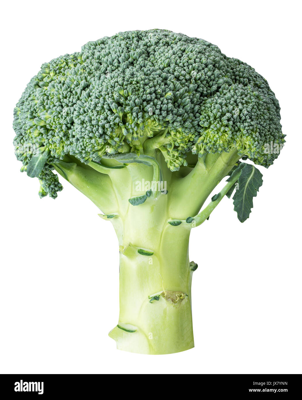 Cabbage broccoli isolated on white background with clipping path - Stock Image