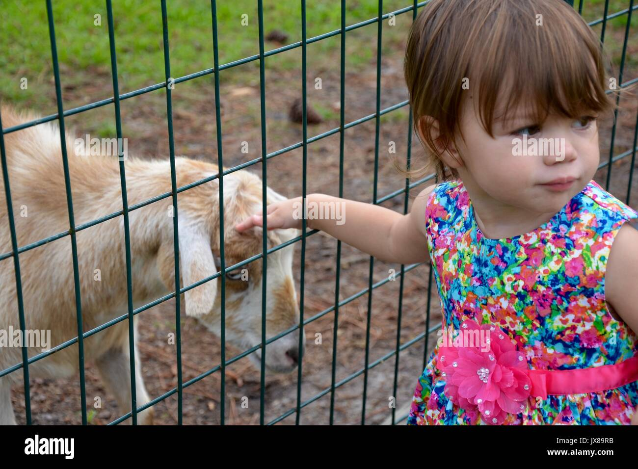 Little girl petting a goat through the fence. - Stock Image