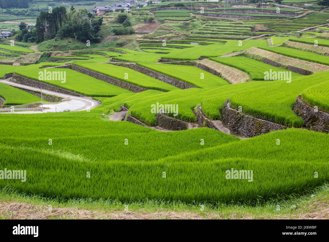 Onigi Hasami Rice Terraces - Curving their way up the mountain slopes, the terraced rice fields at Onigi Hasami Tanada are the result of local farmers - Stock Image