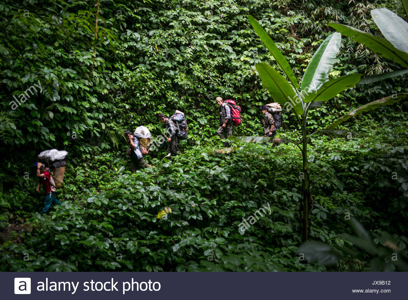 Mountain climbers and porters ferry loads of gear through jungle vegetation. - Stock Image