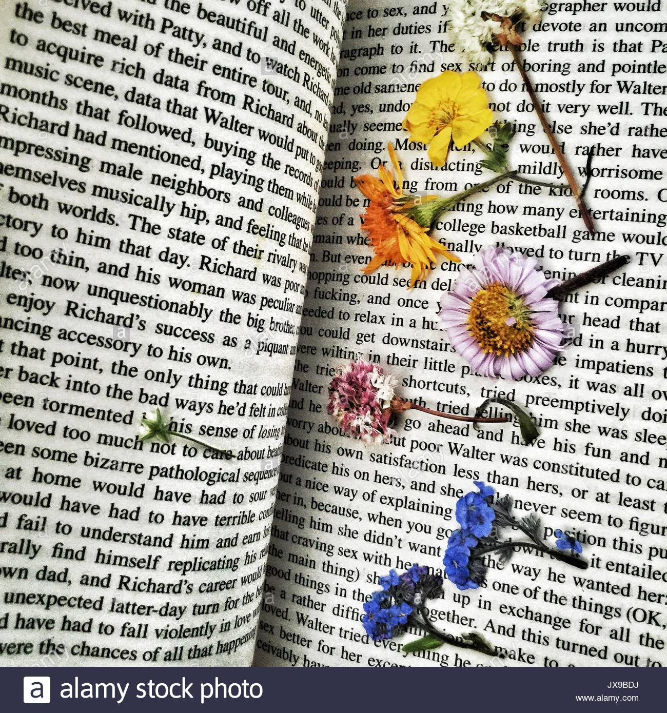 Pressed wildflowers in a paperback book. - Stock Image