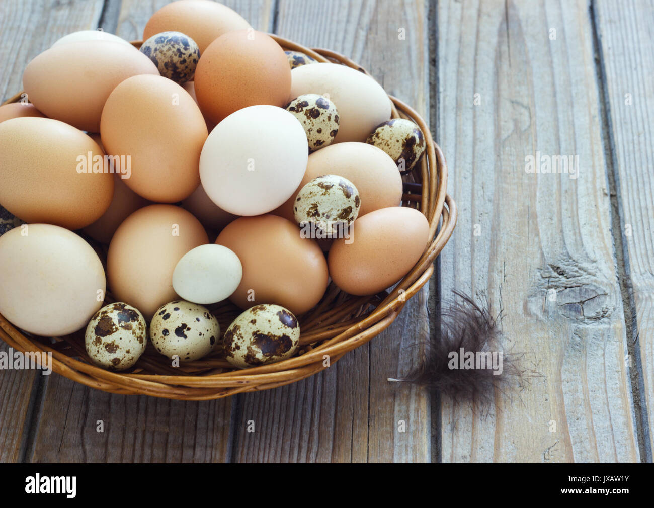 Eggs from chicken and quail farm in a wicker basket. - Stock Image