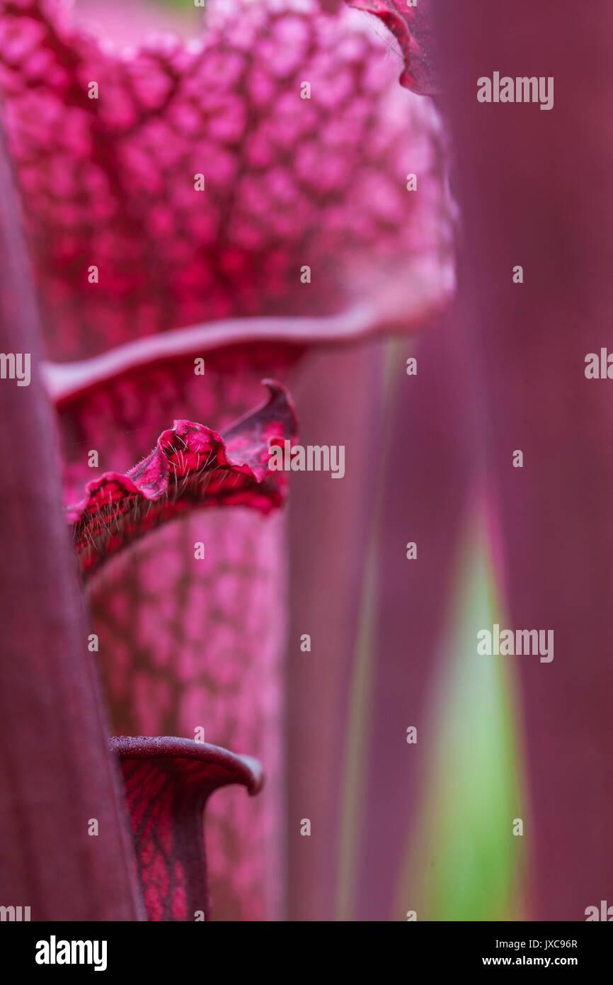 Carnivorous Plant Greenhouses - Stock Image