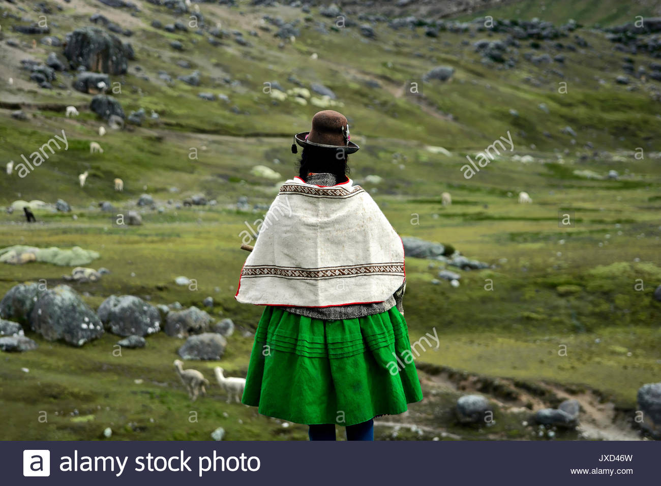 Quechua (kichwa) indigenous woman looking for her herd of alpacas at Peruvian highlands - Stock Image