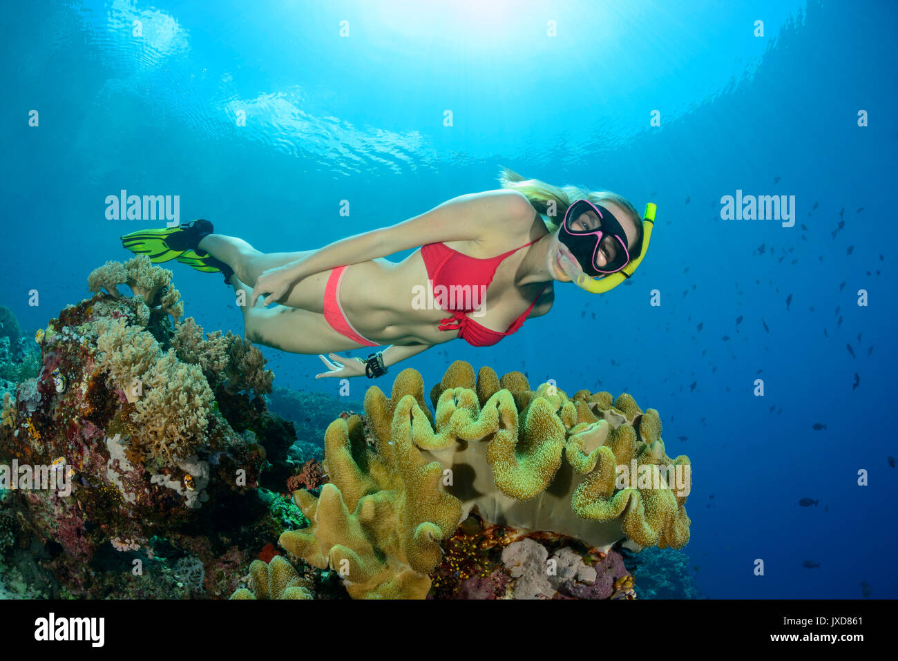 Young woman snorkeling in beautiful Coralreef on Selayar Island, Indonesia, Indian Ocean - Stock Image
