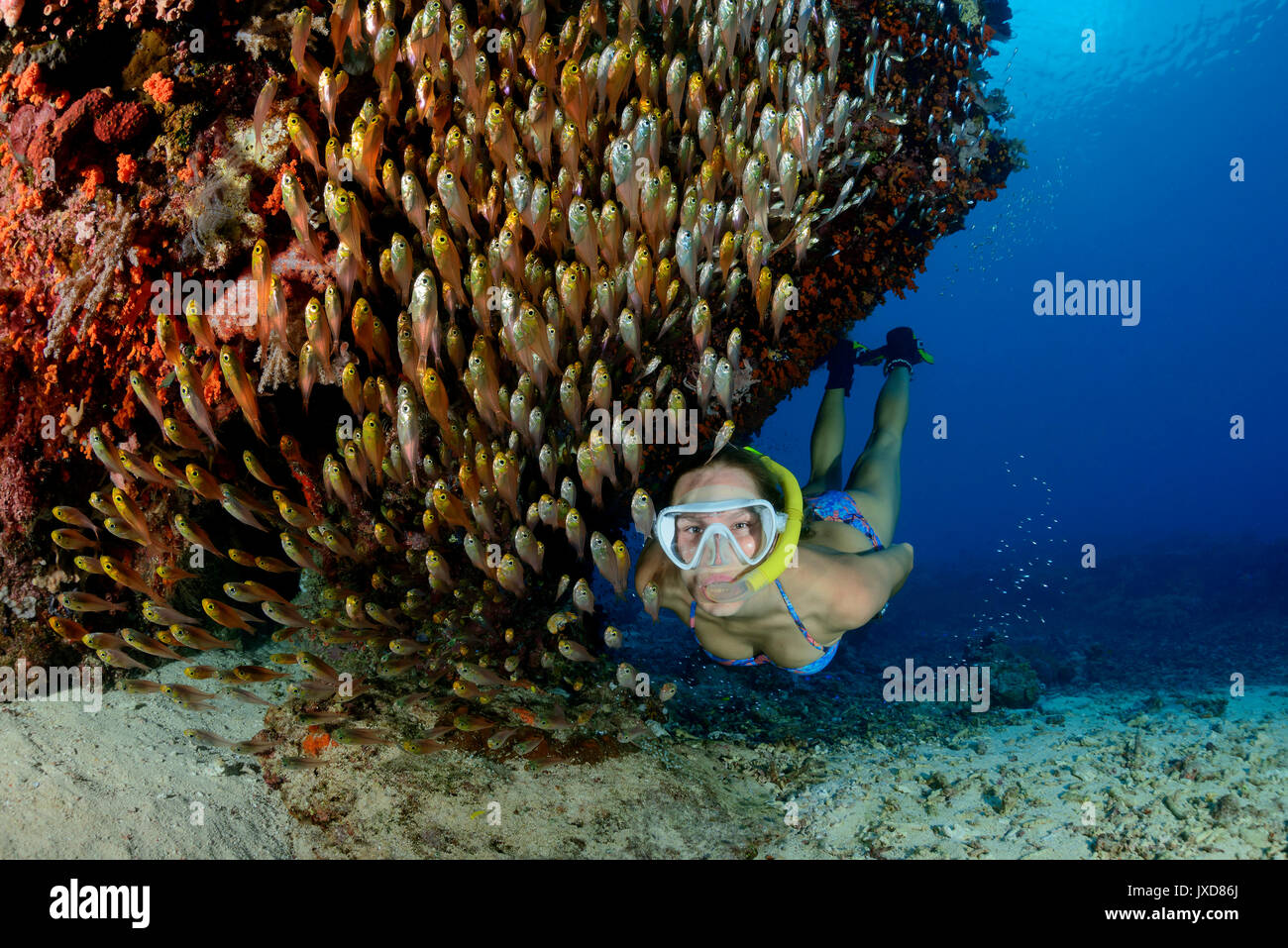 Young woman snorkeling in beautiful Coralreef with school of Pigmy Sweeper, glassfishes, Selayar Island, Indonesia, Indian Ocean - Stock Image