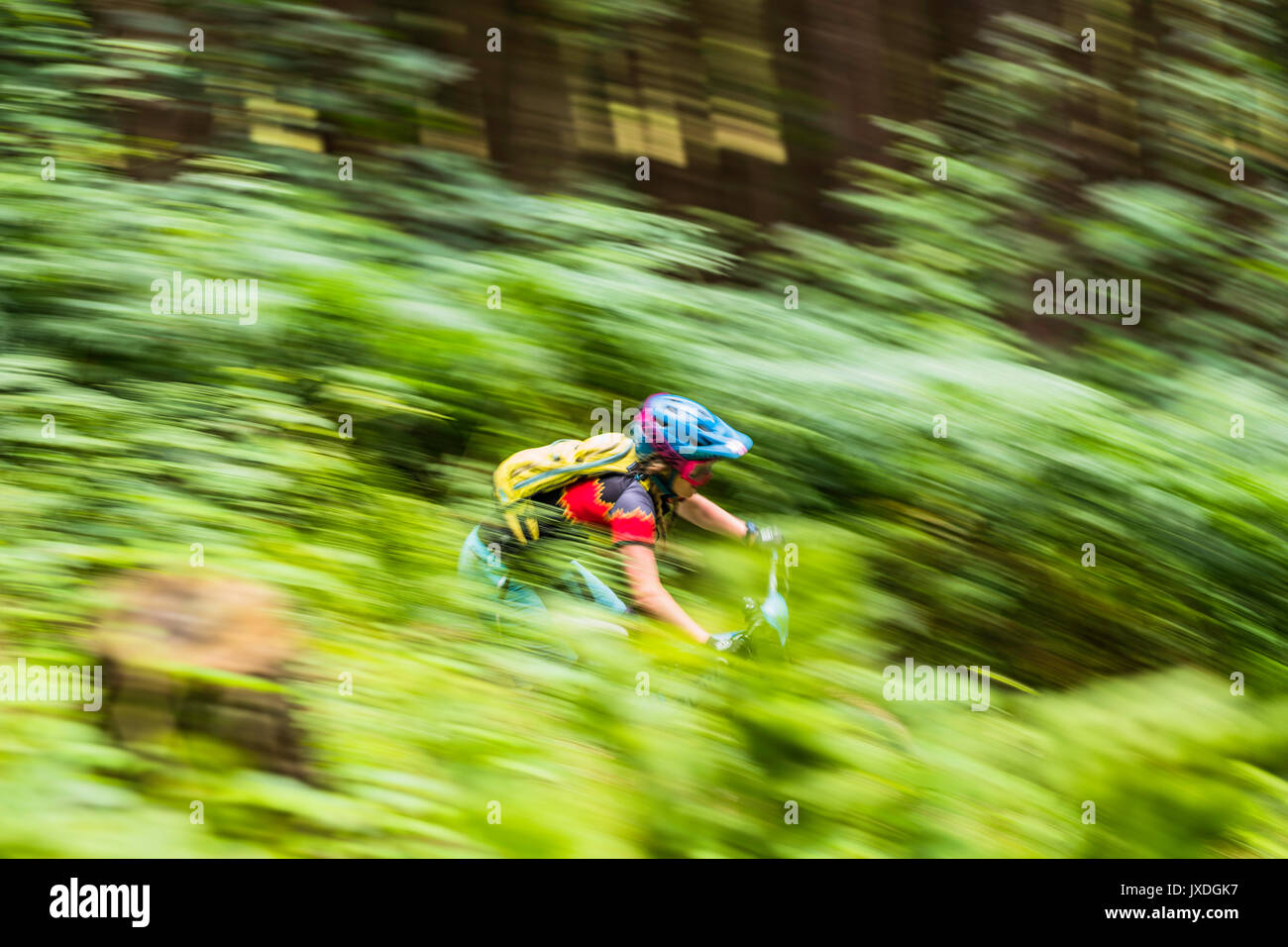 Innerleithen, Peebles, Scottish Borders, UK. 13th August 2017. Mountain bikers compete in the POC Scottish Enduro Series in the Tweed Valley. - Stock Image