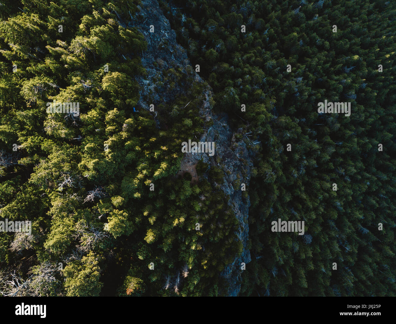 Top view from drone of green trees - Stock Image