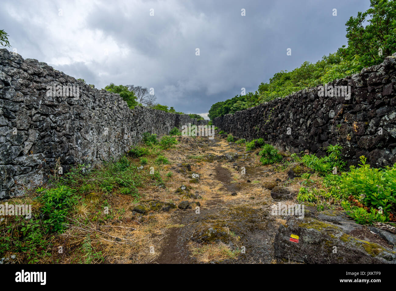 Caminhos de Santa Luzia trail, Pico island, Azores Stock Photo