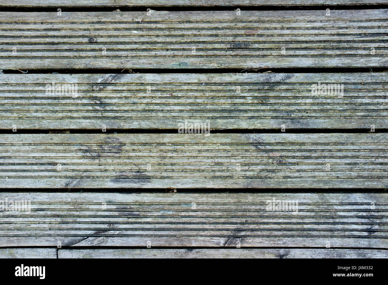 Detail of grey wooden decking with green mould in need of jet washing - Stock Image