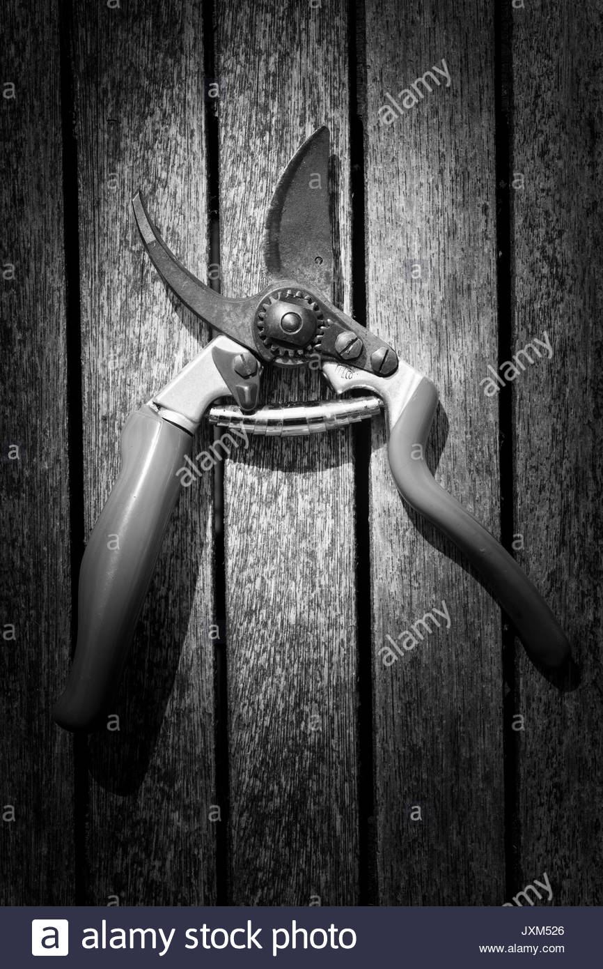Black and white vignetted photograph of secateurs on a wooden table - Stock Image